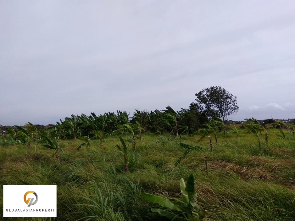 TBR009S 1 1 - PERFECT LAND WITH NATURAL VIEW IN BERAWA CANGGU FOR SALE
