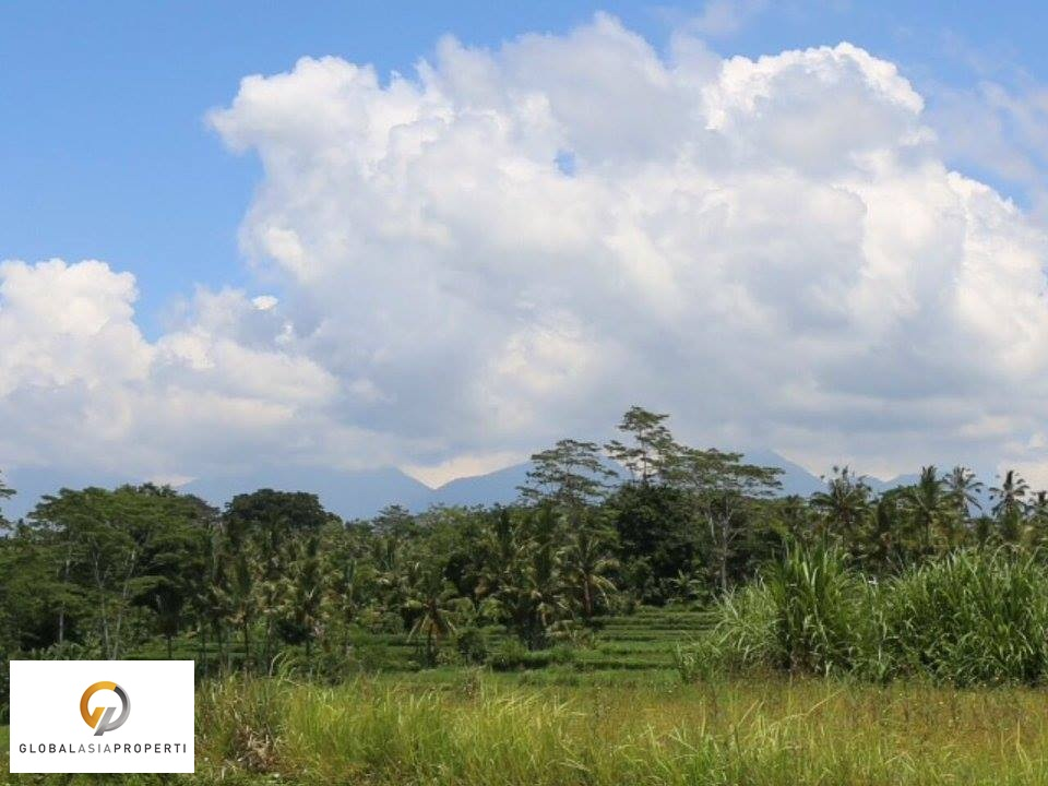 1 31 - PERFECT LAND FOR BUILDING IN UBUD FOR SALE