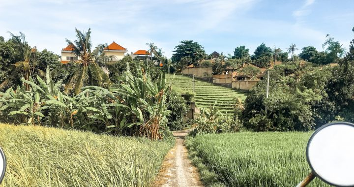 Canggu rice fields bali 720x380 - Best Thing to do In Canggu