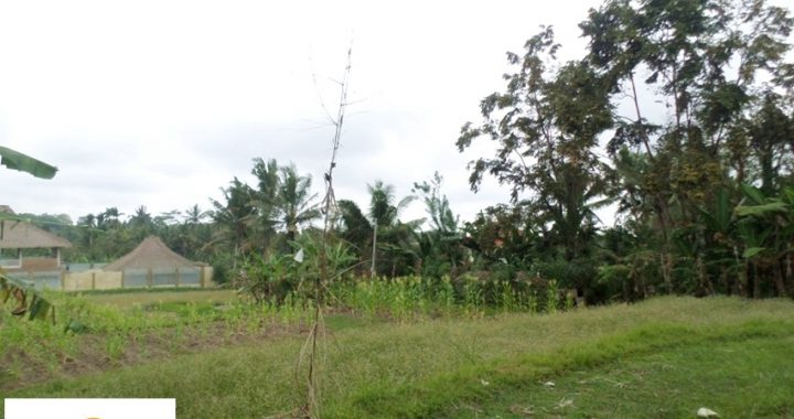 SAM 1743 720x380 - PERFECT LAND AND GOOD FOR INVESTMENT IN GIANYAR FOR SALE